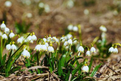 Gartenarbeit im März: Alles auf einen Blick!