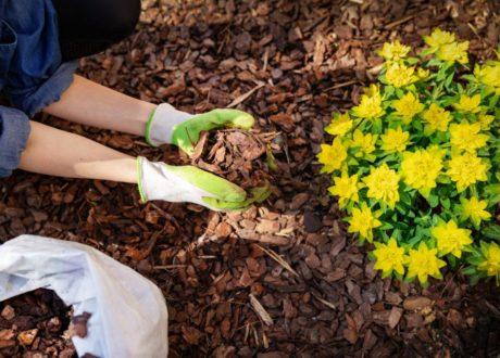 Rindenmulch Wird Zu Blumen Gegeben