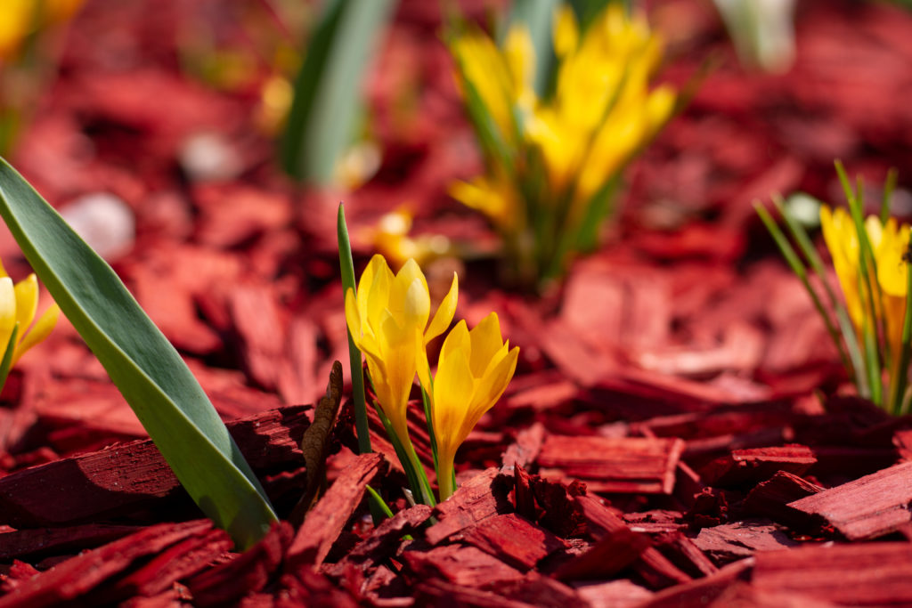 Blumen in rotbraunem Mulchmaterial