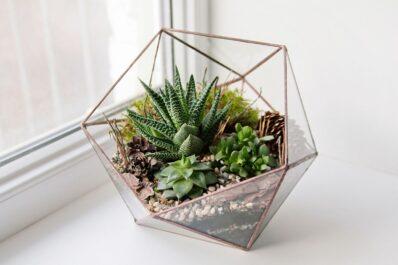 Sukkulenten im Glas pflanzen: DIY-Deko-Tipp