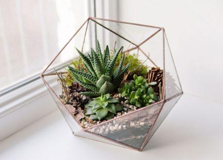 Sukkulenten Im Glas Auf Fensterbrett