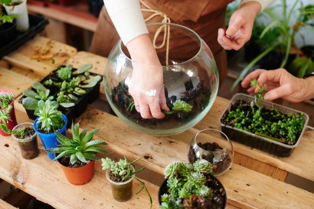 Sukkulenten werden in ein Glas mit Erde gepflanzt