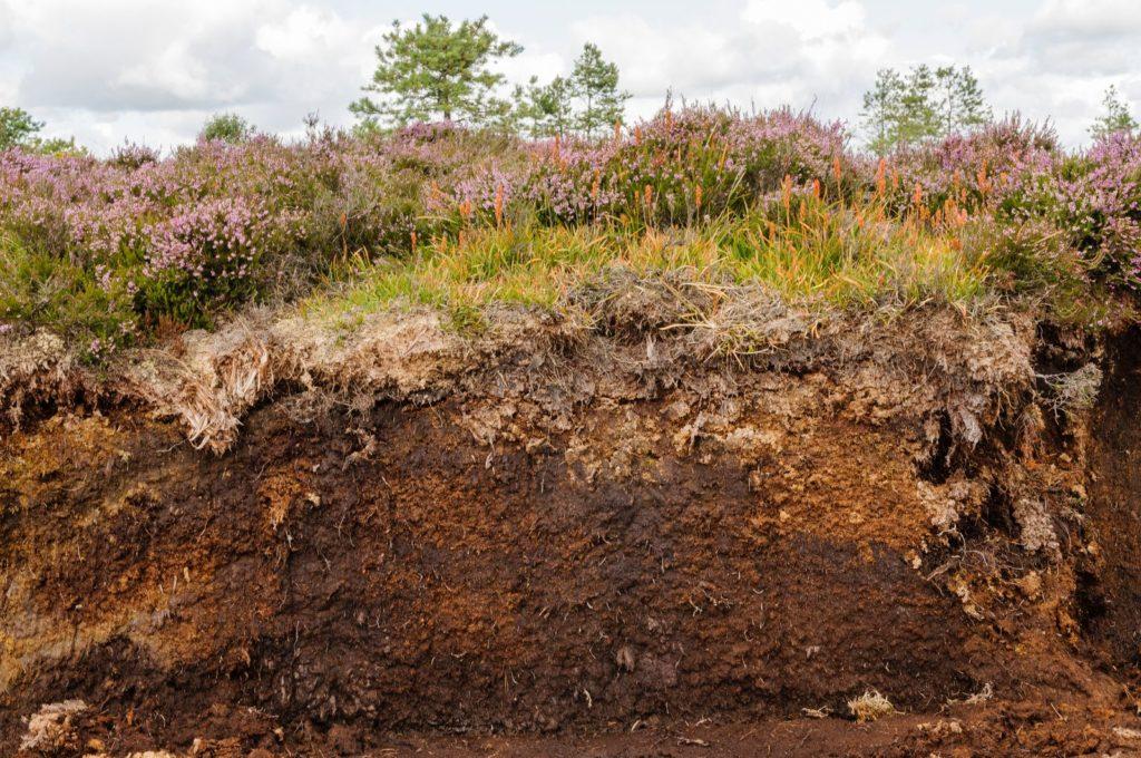 Dicke Torfauflagen im Moor