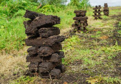 Was ist Torf? Alles zur Entstehung & Verwendung im Garten