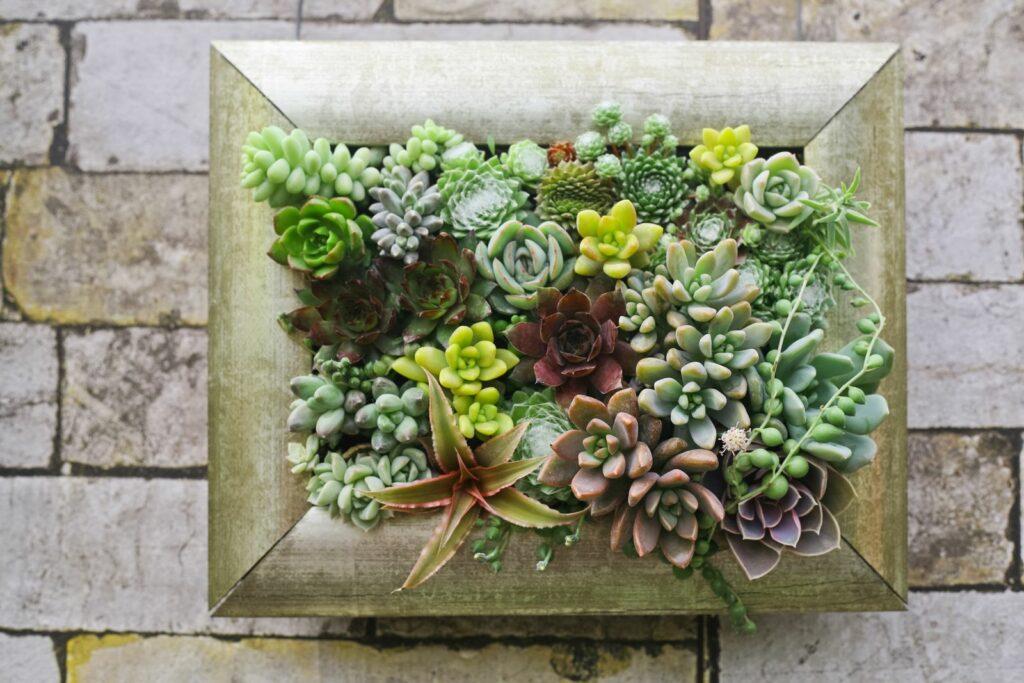Sukkulenten im Bilderrahmen pflanzen: DIY vertikaler Garten