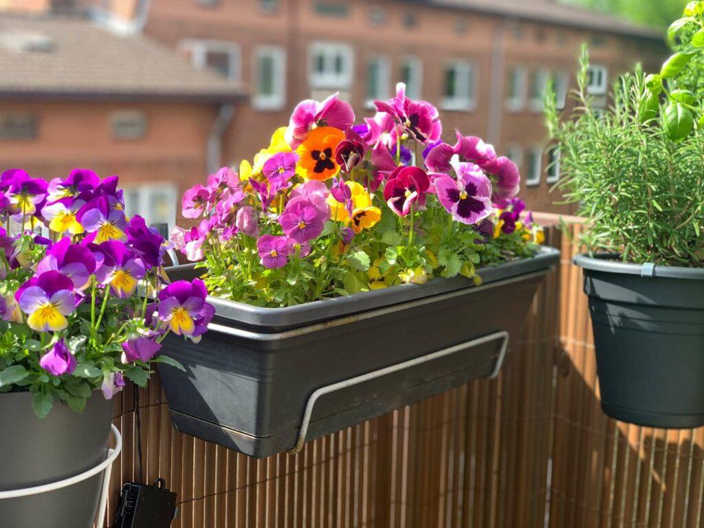 Blühender Balkonkasten