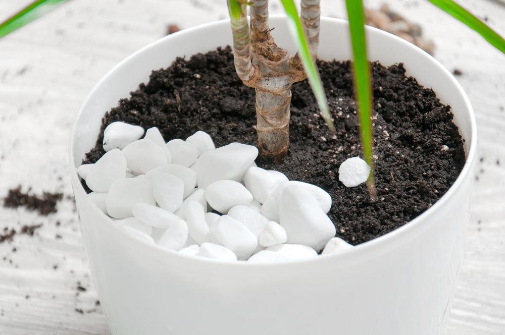 Steine in einem Blumentopf als Mittel gegen Schimmel
