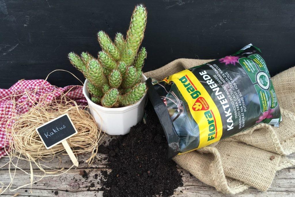 Floragard Kakteenerde und ein Kaktus im Topf