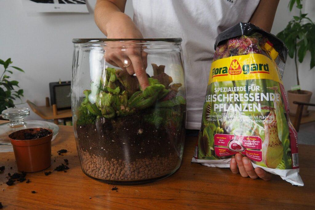 Karnivoren werden in Floragard Speziealerde gepflanzt