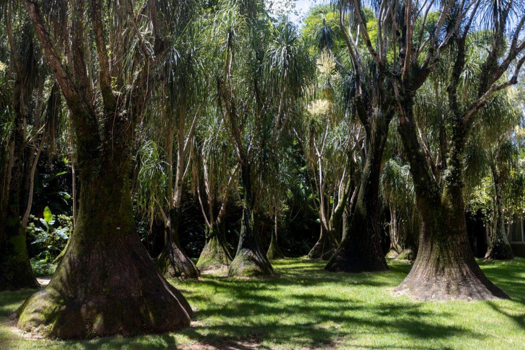 Wald mit großen Elefantenfüßen