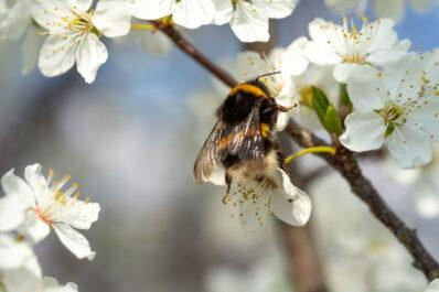 Insektenfreundliche Stauden & Sträucher: Heimische Gehölze für Insekten