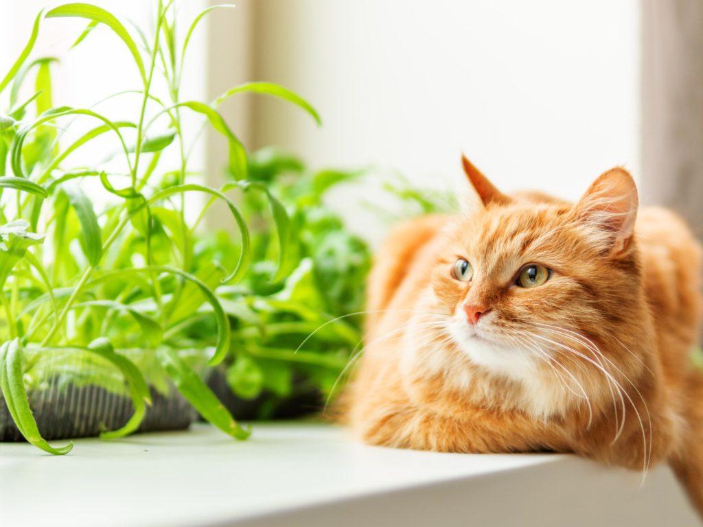 Katze auf einem Fensterbrett neben Kräutern