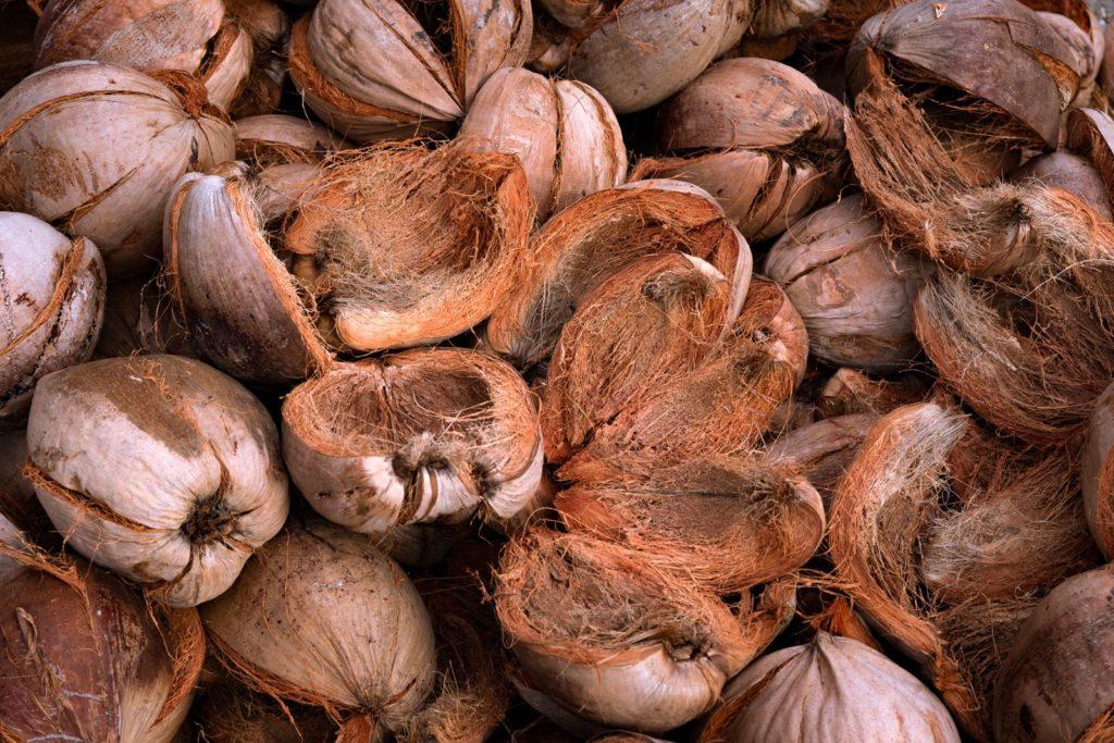 Kokosnüsse liegen auf einem Haufen