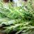 Kräuter ernten: Richtiger Zeitpunkt & Tipps zur Ernte
