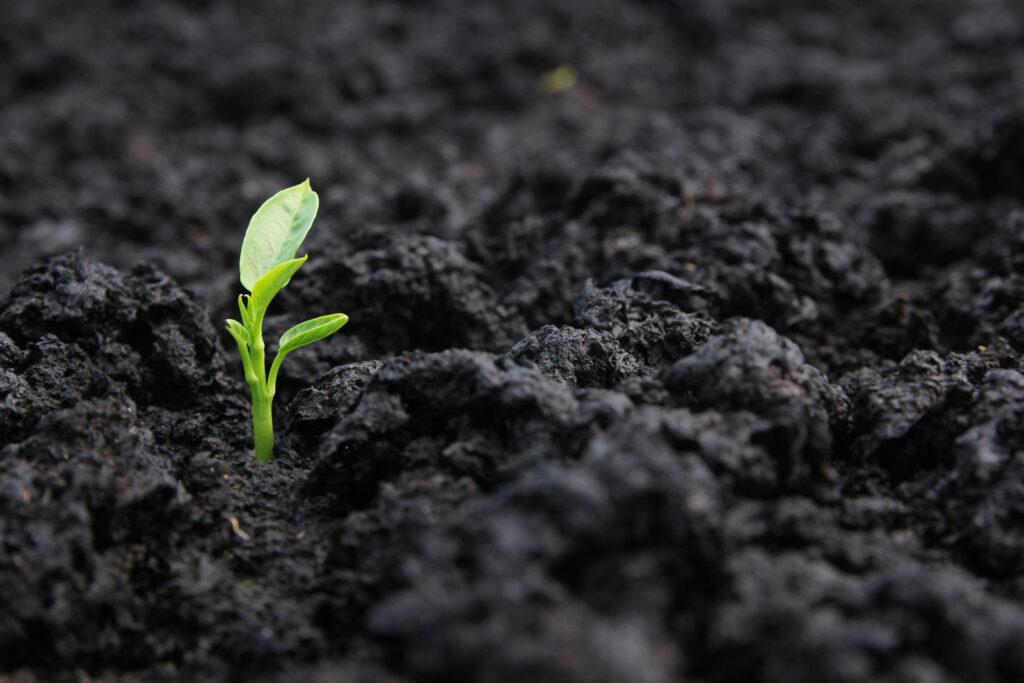 Junge Pflanze in der Erde