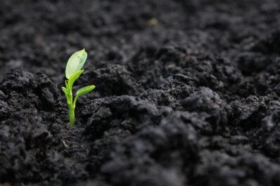 Was ist Mutterboden?