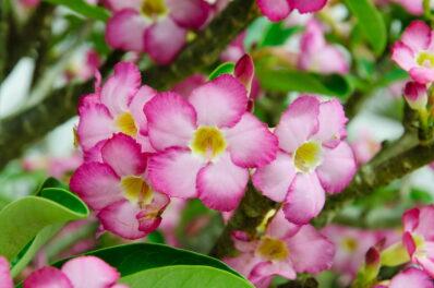 Sukkulenten mit Blüten: Die schönsten blühenden Arten