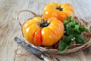 Ananastomate: Alles zum Pflanzen & Ernten
