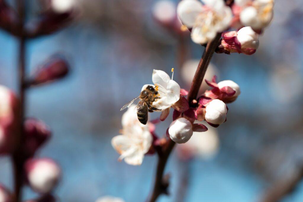 Bienenfreundliche Bäume: Unsere Top 10