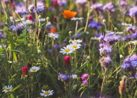 Bienenweide Mit Verschiedensten Blumen