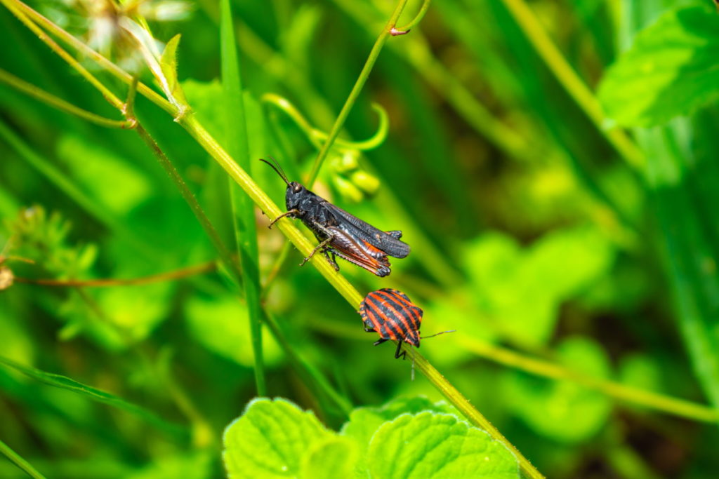 Insekten auf einer Pflanze