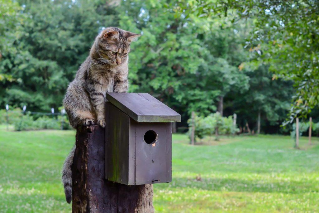 Katze schaut auf einen Nistkasten herunter