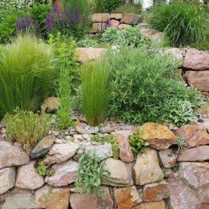 Natursteinmauer Mit Verschiedenen Kräutern