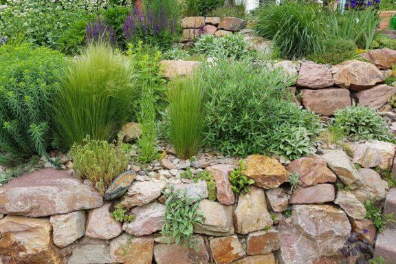 Trockenmauer im Garten: 5 Tipps zur richtigen Bepflanzung