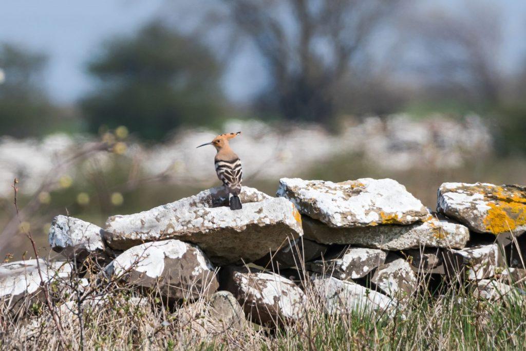Vogel sitzt auf einer Steinmauer