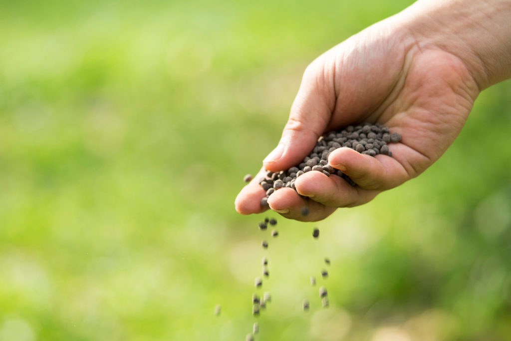 Veganes Düngergranulat wird von Hand verstreut