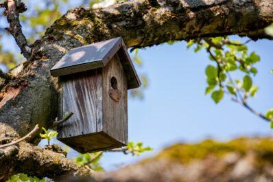 Nistkasten selber bauen: So sieht der perfekte Vogelkasten aus