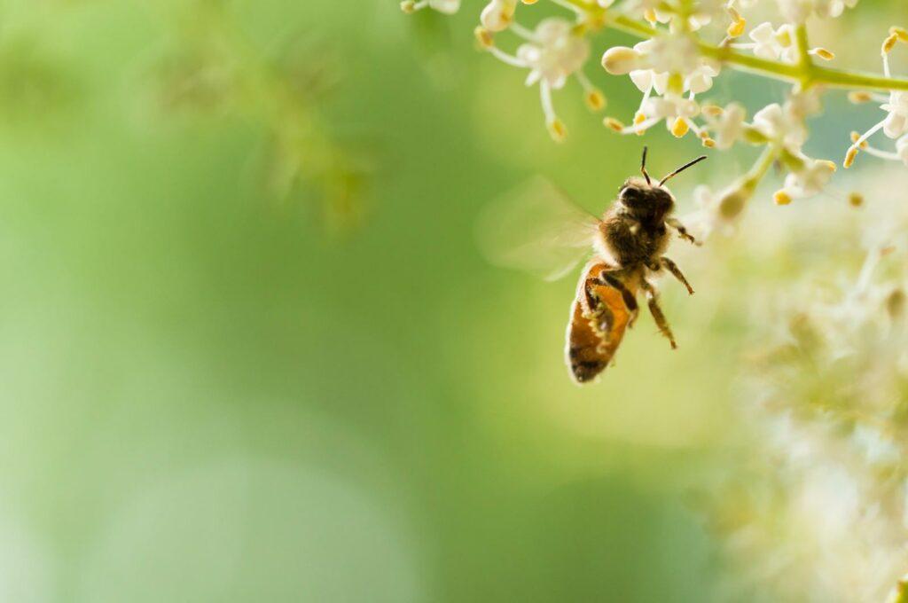 Wie kann man Bienen helfen? Experten-Tipps zur Rettung der Bienen
