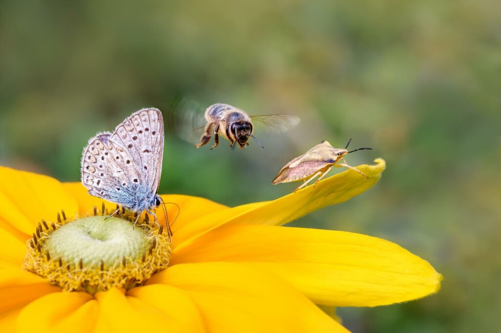 Insektenfreundliche Blumen: Für einen summenden Garten & Balkon