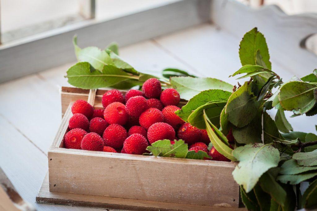 Früchte des Erdbeerbaumes