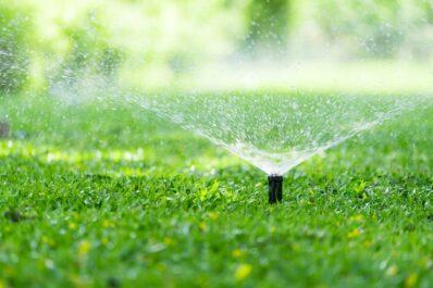 Rasen bewässern: So gießt man richtig