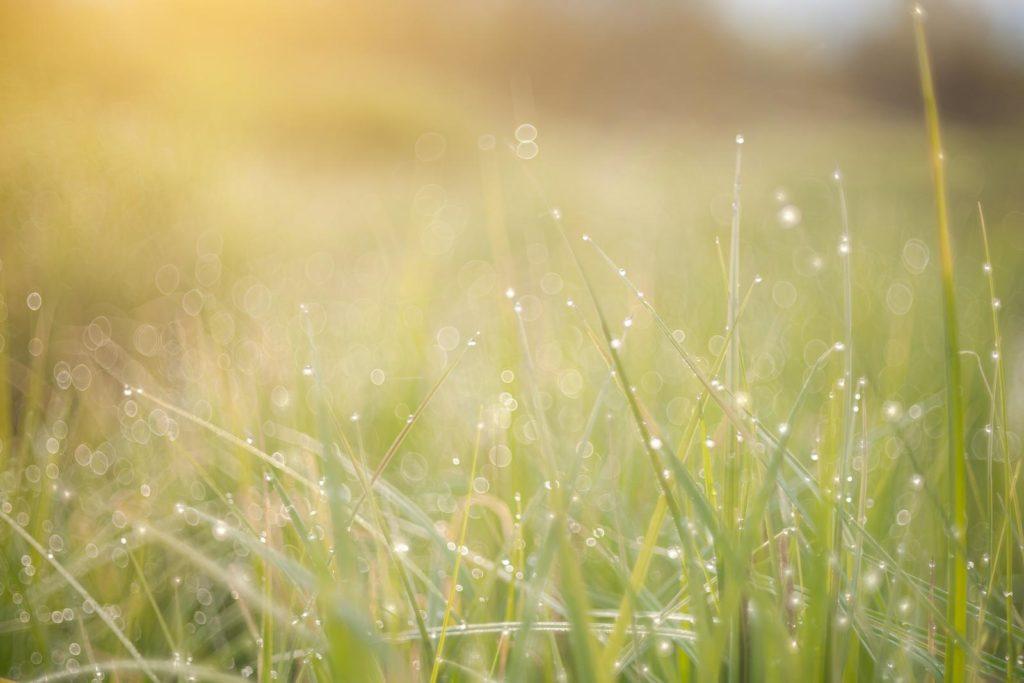 Rasen in der Morgensonne
