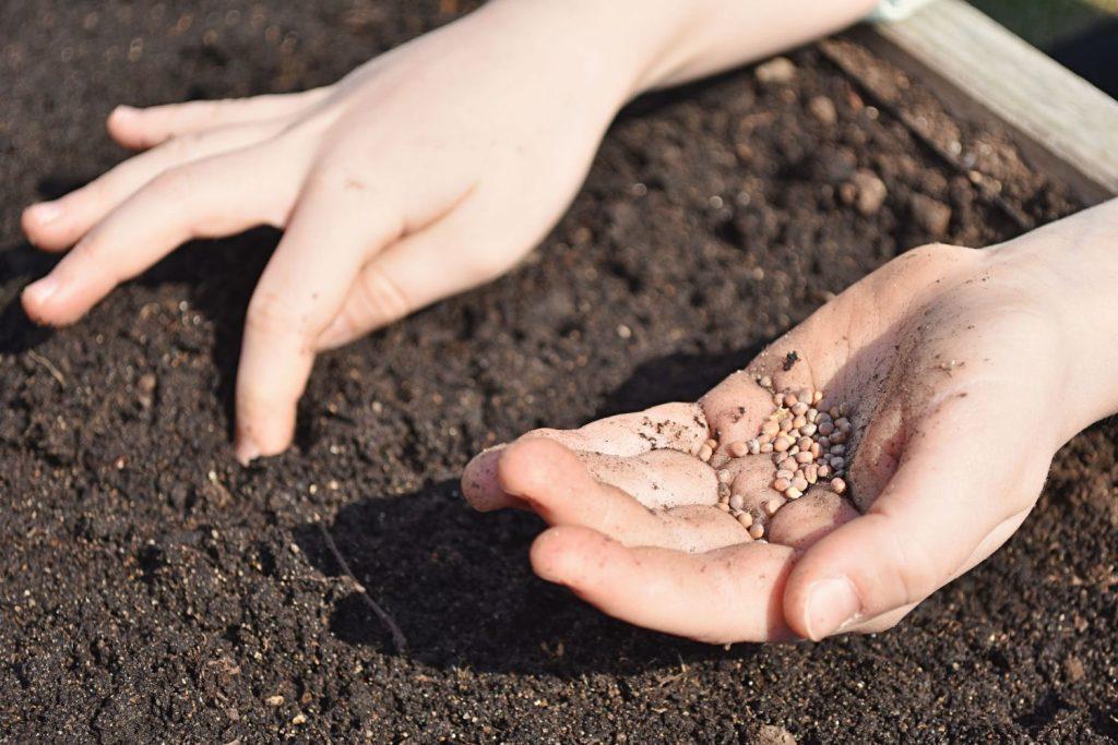 Samen werden von Händen ausgesät
