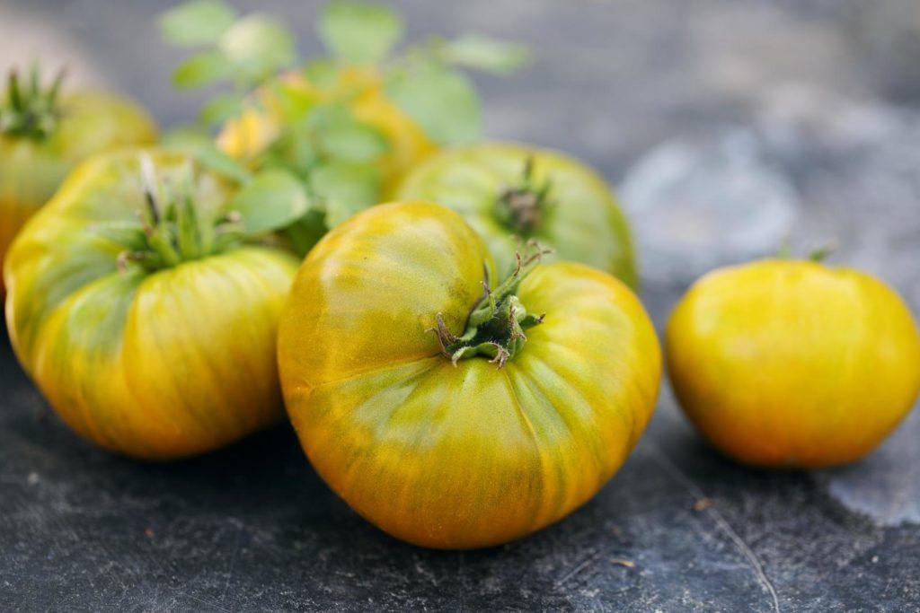 Reife grüne Tomaten