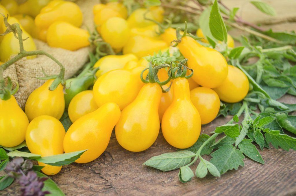 Birnenförmige gelbe Tomaten