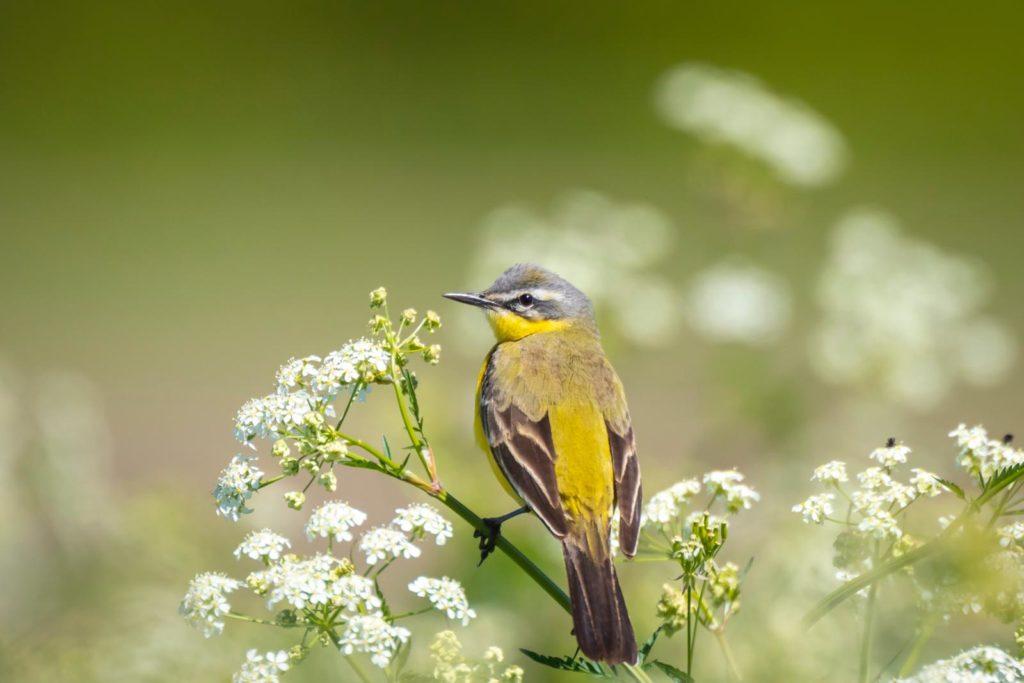 Vogel auf zweig des Gierschs