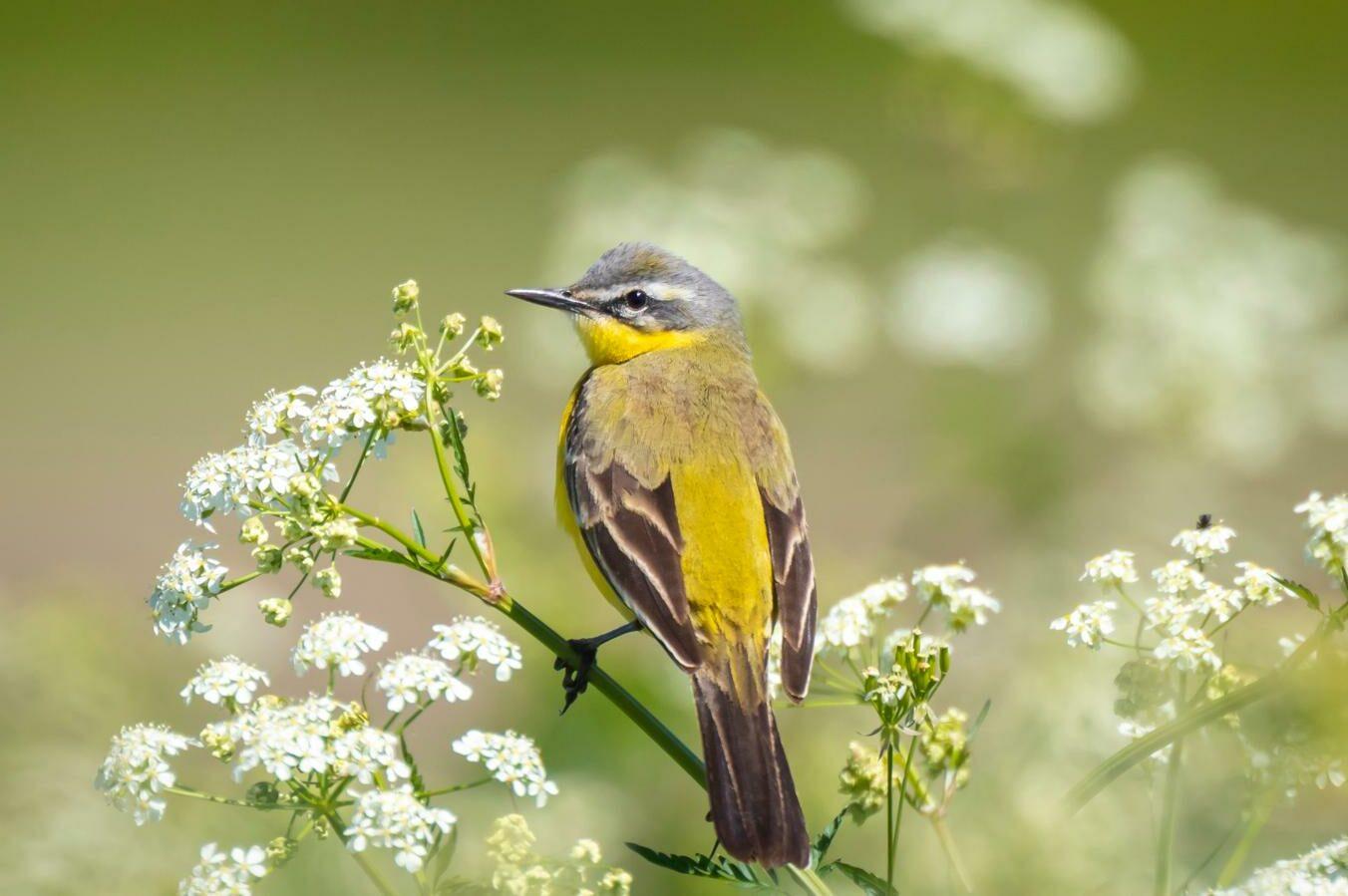 Vogelfutterpflanzen: 13 vogelfreundliche Kräuter