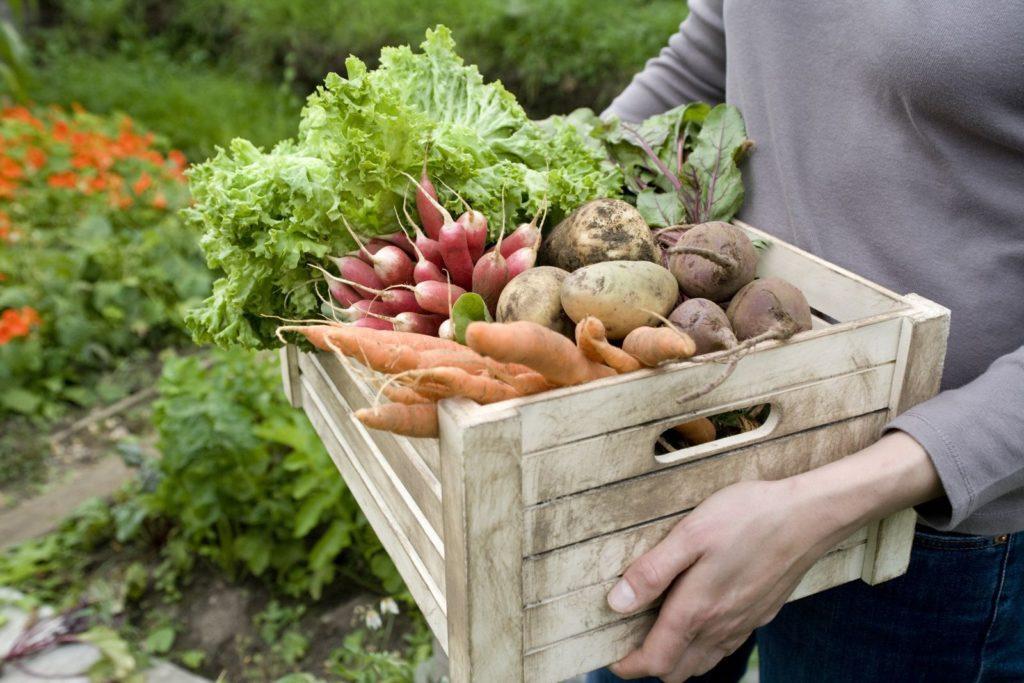 Korb mit reifem Gemüse