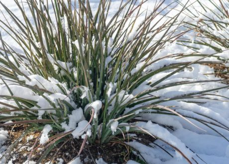 Yucca-Palme Im Schnee
