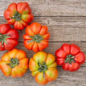 Costoluto Genovese Tomaten