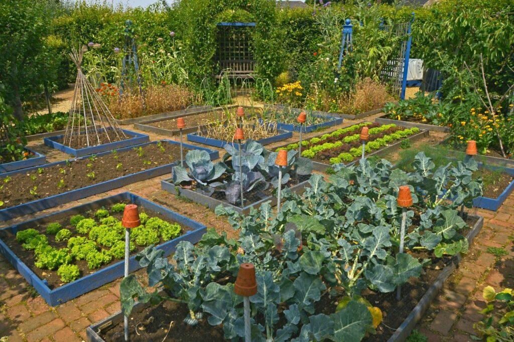 Gartenarbeit im August: Alles auf einen Blick