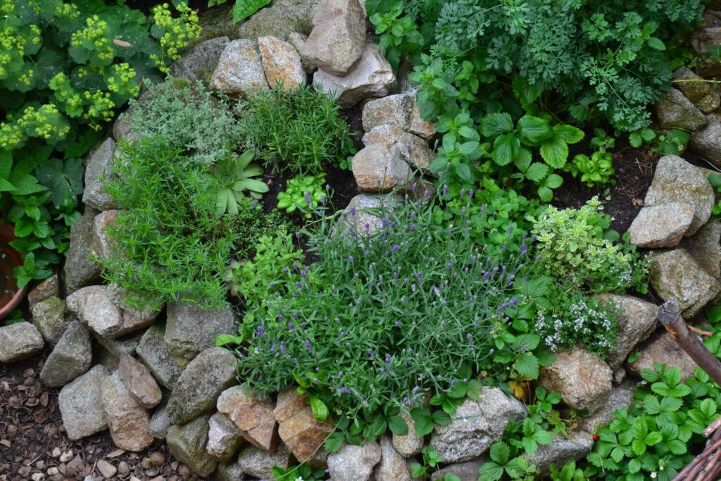 Kräuterspirale bepflanzt mit Kräutern