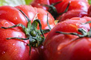 Reife Roter Russe Tomaten