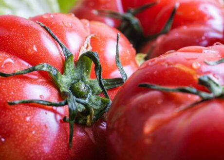 Reife Roter Russe Tomaten
