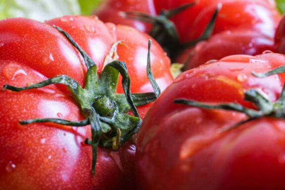 Tomate Roter Russe