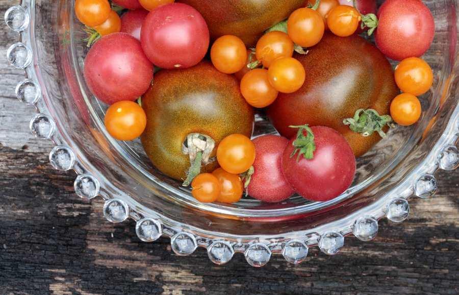 Paul-Robeson-Tomate: Tipps zu Anbau & Pflege der Salattomate